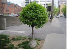 A little tree – Fiona Scannell