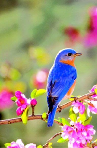 hermosos colores Pájaros hermosos Aves hermosas y
