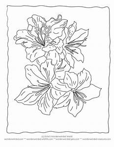 Tigerlily Colouring Pages Tiger Lily Flower Coloring Pages ...