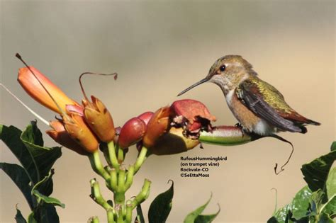 fall hummingbird migration birds and blooms
