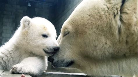 polar bear names ohio zoo