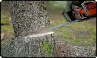 triassic tree service tree services in grand county moab