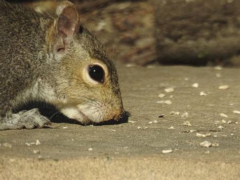 do squirrels eat nyjer seed is there a seed squirrels won t eat birdseed binoculars