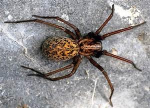 Mittel Gegen Spinnen Im Haus : pflanzen gegen spinnen pflanzen gegen insekten spinnen vertreiben bek mpfen hausmittel gegen ~ Buech-reservation.com Haus und Dekorationen