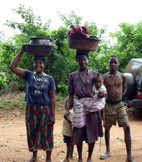 pictures  african cocoa farming cocoa harvesting