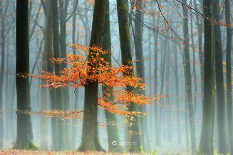schöne bilder vom herbst herbstbilder sch 246 ne fotos vom herbst easyprint