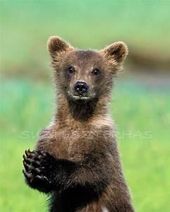 CUTE BABY BEAR Photo Print Baby Animal Photograph Wildlife