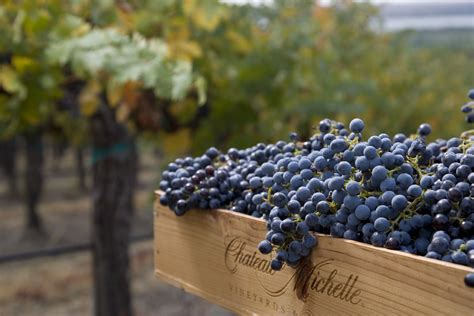 cabernet washington michelle chateau sauvignon state ste wine winery seattle guide woodinville wines csm usa point