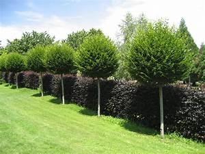 Kleine Bäume Für Den Garten : garten hinrei end b ume f r den garten ideen elegant b ume f r den garten ideen scarrdc ~ Markanthonyermac.com Haus und Dekorationen