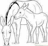 Donkey Coloring Zedonk Mother Printable Coloringpages101 sketch template