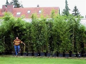 Bambus Im Garten : bambus garten ~ Markanthonyermac.com Haus und Dekorationen