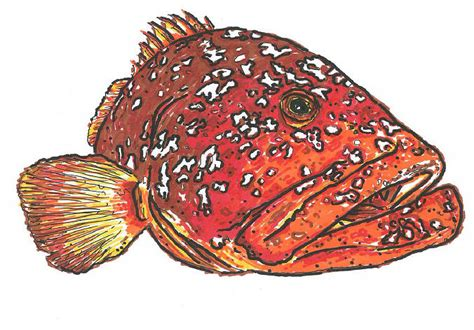 grouper danforth drawing david drawings 20th uploaded august which