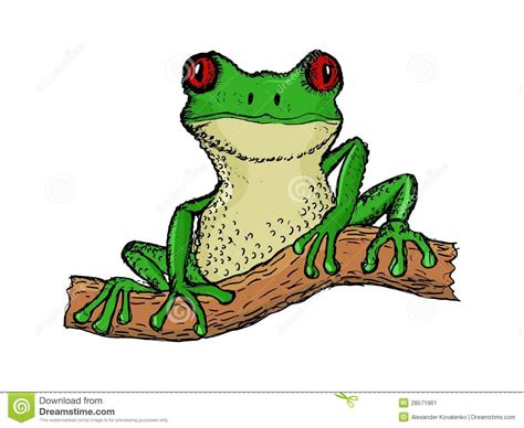 Pacific Tree Frog Drawing Wwwpixsharkcom Images