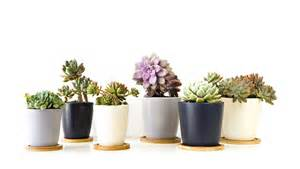 Best Pot Plant For Bathroom by Plantas Suculentas En Sequ 237 A