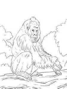 western lowland gorilla coloring page supercoloringcom