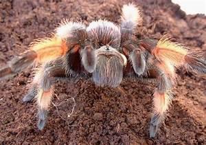 Faire Fuir Les Araignées : l 39 araign e meilleure amie de l 39 homme revue etho logique ~ Melissatoandfro.com Idées de Décoration