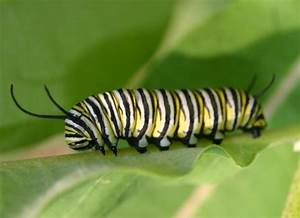 Gop Chairman Reince Priebus Compares Women To Caterpillars