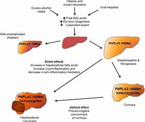The Natural History Of Liver Disease  Several Different