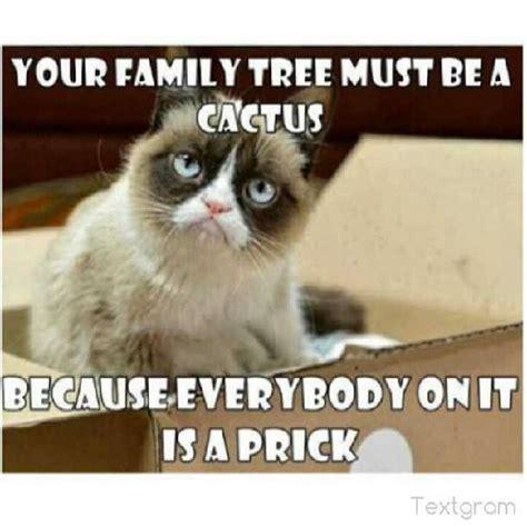 Family Sucks Meme - grumpy cat funny grumpy cat humor grumpy cat meme sarcastic funny grouchy cat for more