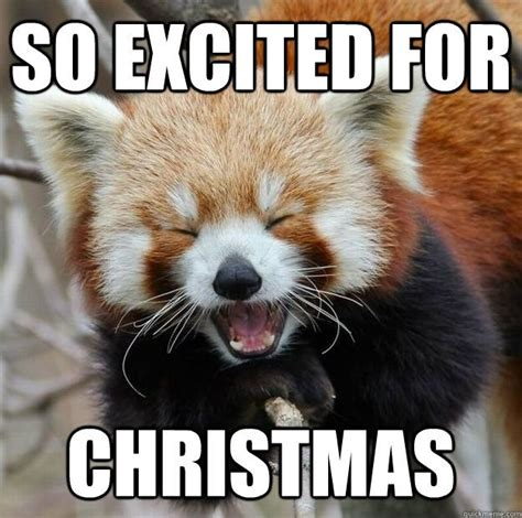 Christmas Meme - 1000 images about christmas memes on pinterest funny dog memes search and grumpy cat
