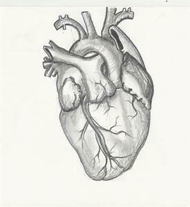 Realistic Heart Drawing Realistic Heart Drawing 1000 Ideas ...