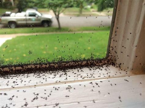 fungus gnats invade safehaven pest control