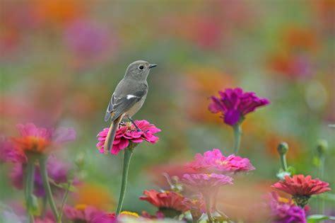Birds Animals Flowers Wallpapers Hd Desktop And Mobile