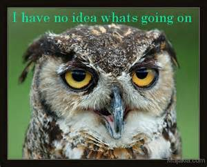 Funny Owl Quotes