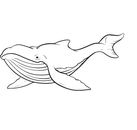 printable whale coloring pages  kids animal place