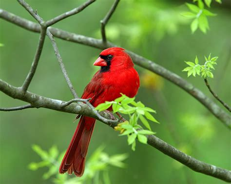 birds hd wallpapers