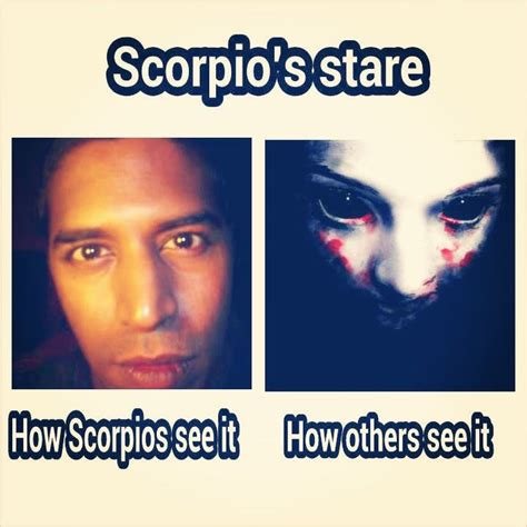 Scorpio Memes - scorpio stare