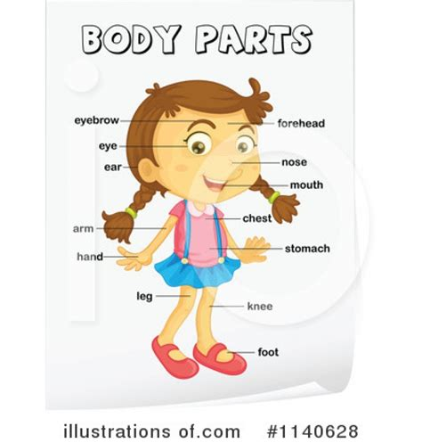 body clipart toddler body toddler transparent