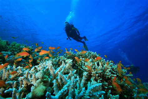 why are the andamans and lakshadweep the top diving