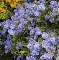 Petit Arbuste Fleuri : cr er une haie fleurie quels arbustes choisir ~ Premium-room.com Idées de Décoration