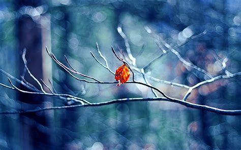 winter tree leaf hd nature  wallpapers images