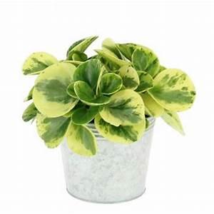 Livraison Fleurs à Domicile : livraison fleurs domicile avec votre fleuriste foliflora ~ Dailycaller-alerts.com Idées de Décoration