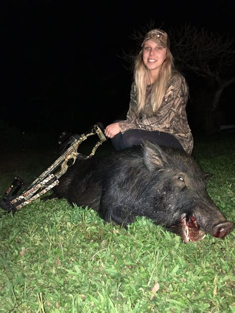 kauai wild boar hunting hog hunts hawaii