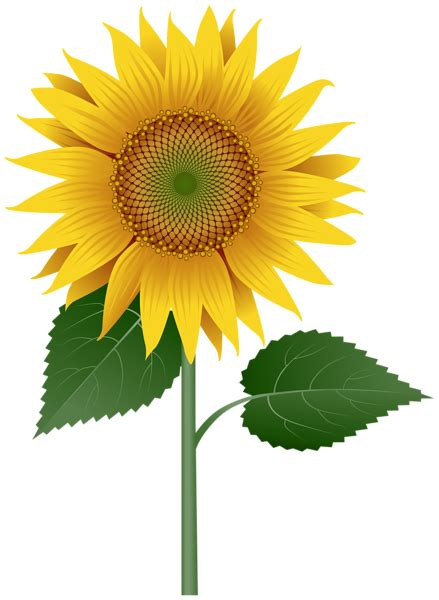 sunflower large transparent image gallery yopriceville