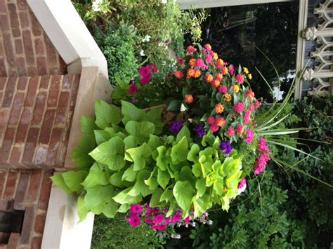 fantastic container gardening ideas  limited space