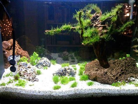 Aquascaping Forum - pflanzen sterben ab was kann ich tun wasserpflanzen