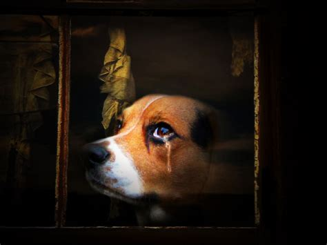 dog crying comment  dogy wallpaper litle pups