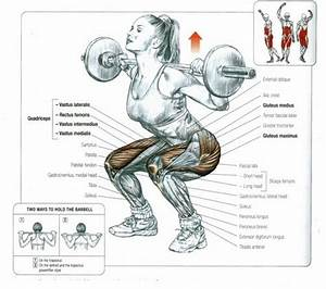 Which Muscles Are Affected By Squats