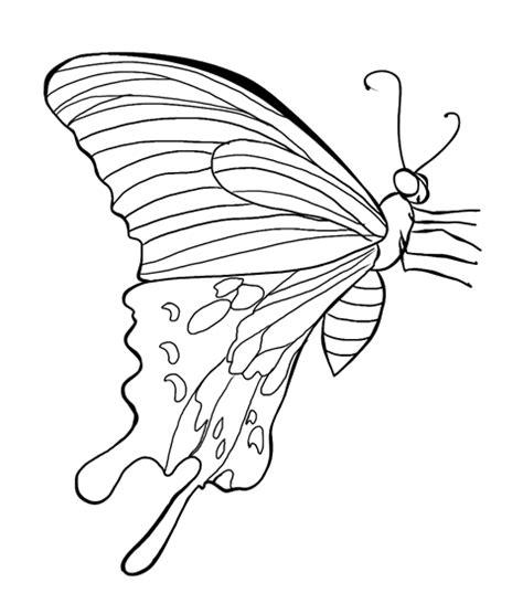 mewarnai kupu kupu  alamendahs blog