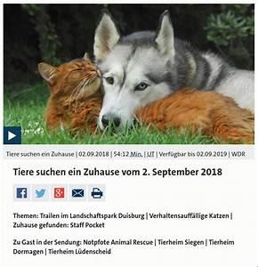 Tiere Suchen Ein Zuhause Instagram : tiere suchen ein zuhause archive notpfote animal rescue e v ~ Watch28wear.com Haus und Dekorationen