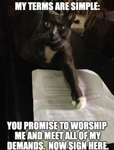 Funniest Cat Memes - funniest cat memes uk cat breeders
