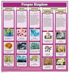 montessori materials fungi kingdom chart