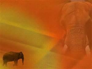 Karur Vysya Bank Elephant 02 Powerpoint Template