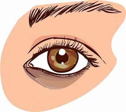 Eye Dark Clipart Circles Eyes Wrinkles Puffy