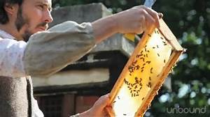 letters to a beekeeper by alys fowler and steve benbow With letters to a beekeeper
