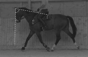 Withers Angle  Horse During Suspension Phase  Showing The